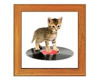 Dessous de plat : Chat sur un disque