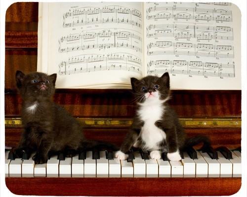 Tapis de souris 23 cm x 19 cm : Deux chatons sur un piano