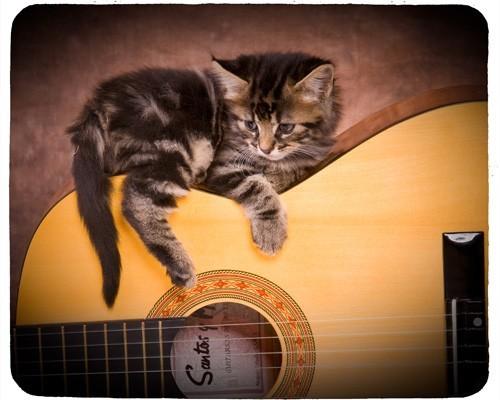 Tapis de souris 23 cm x 19 cm : Chat sur une guitare