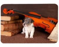 Tapis de souris 27 cm x 20 cm : Chiot entouré d'un violon et de partitions