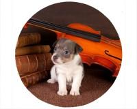 Tapis de souris rond : Chiot entouré d'un violon et de partitions