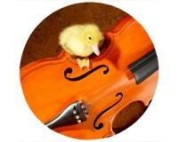 Tapis de souris rond : Caneton sur un violon