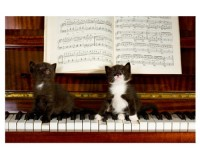 Poster 2 chatons sur un piano