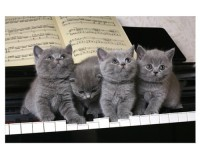 Poster 3 chatons sur un piano