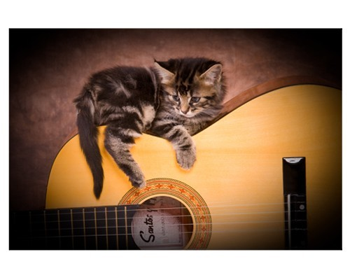 Poster Chaton sur une guitare
