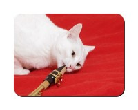 Aimant Chat saxophoniste